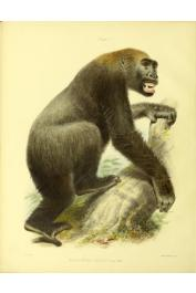 OWEN Richard - Memoir on the gorilla (Troglodytes Gorilla, Savage) Frontispice