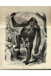 DU CHAILLU Paul Belloni - Explorations and Adventures in Equatorial Africa